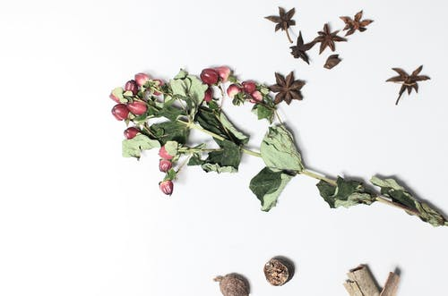 Top view of hypericum with dried verdant leaves on stems near anise and nutmegs on white background