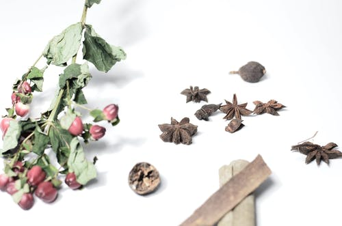 From above of cinnamon with nutmeg near anise and hypericum with dried green leaves on stems on white background