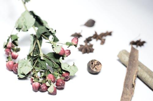 Hypericum with lush green leaves near nutmeg and cinnamon