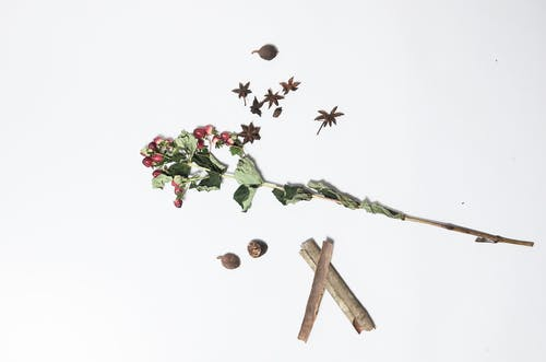 Top view of hypericum with long green stem and dried leaves near anise and sticks of cinnamon on white background