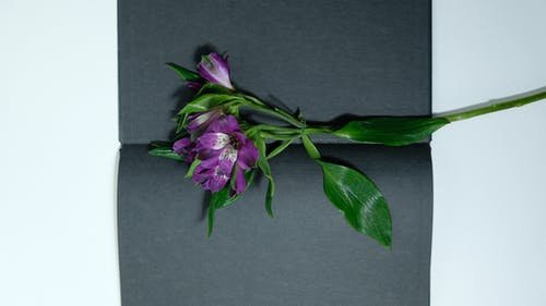 緑の葉と紫色の花