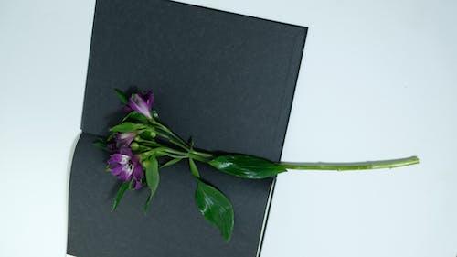 黒のテキスタイルに紫の花