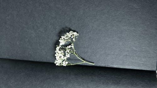คลังภาพถ่ายฟรี ของ กระดาษ, กลิ่น, กลิ่นหอม