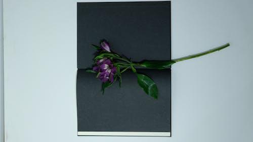 黒い紙に紫色の花