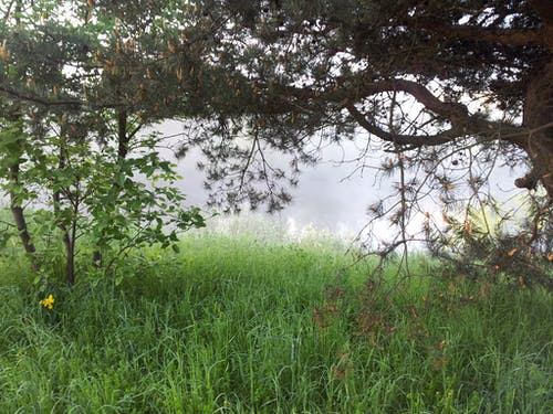 Free stock photo of fog, gras, green