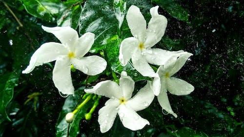 güzel çiçekler, HD duvar kağıdı, masaüstü duvar kağıdı, yağmur içeren Ücretsiz stok fotoğraf