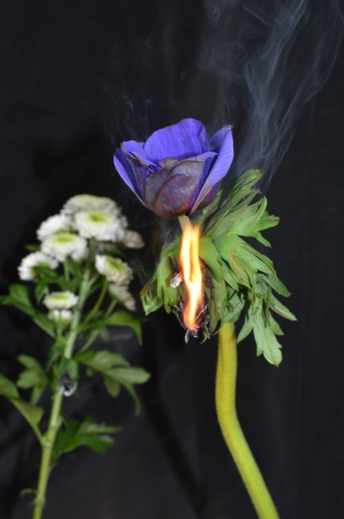 Fresh bouquet behind burning flower with blue petals on green stem in room