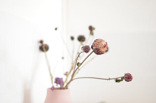 Kahverengi Toprak Kapta Pembe çiçek