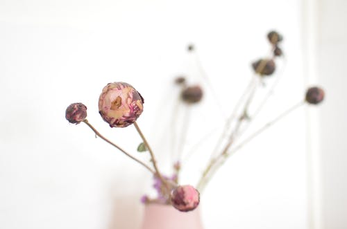 Bouquet of dried delicate pink peony flowers placed in vase near white wall in light room