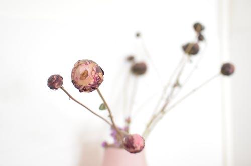 Tilt Shift Objektifte Pembe çiçek Tomurcukları