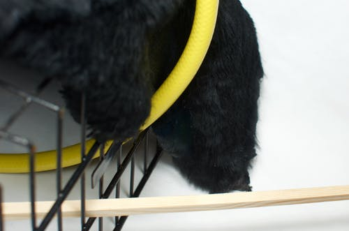 Faux black fur covering metal cage with yellow hoop and wooden plank