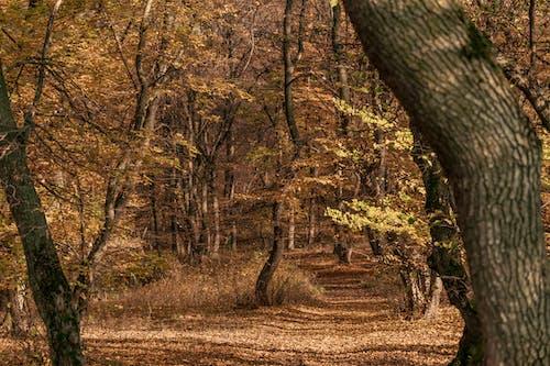 atmosfera de outono, 가을, 가을 분위기 숲의 무료 스톡 사진