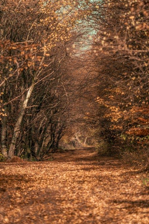 가벼운, 가을, 가을 분위기 숲의 무료 스톡 사진