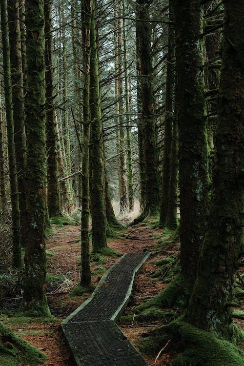 Ingyenes stockfotó borongós, borult, erdei ösvény témában