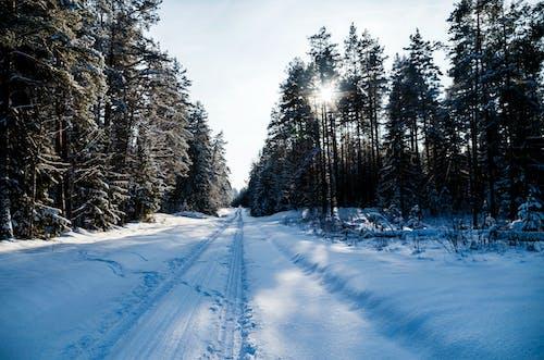 Foto d'estoc gratuïta de a l'aire lliure, bosc, carretera
