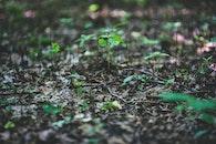 pflanze, blatt, blätter