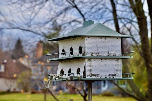 A Birdhouse in the Backyard