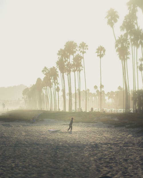 Anonymous distant person walking on empty embankment with tall exotic palms against cloudless sky in coastal terrain with tropical plants