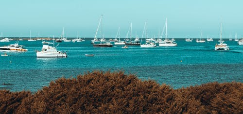 Free stock photo of ble sea, boats, grass and sea