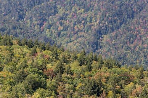 Gratis stockfoto met berg, bomen, Bos, daglicht