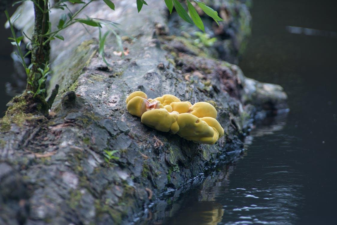 Free stock photo of flora, mushroom, nature