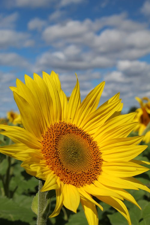 Бесплатное стоковое фото с вертикальный выстрел, желтый цветок, крупный план