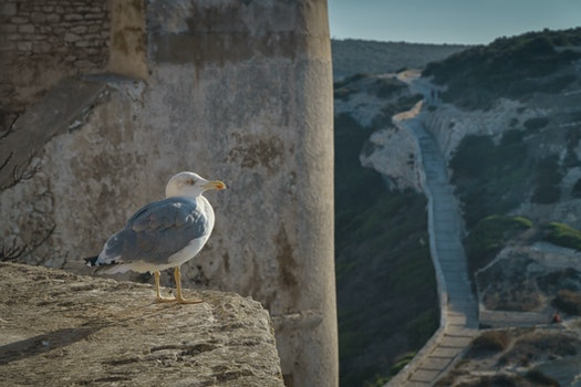 Free stock photo of nature, bird, france, wall