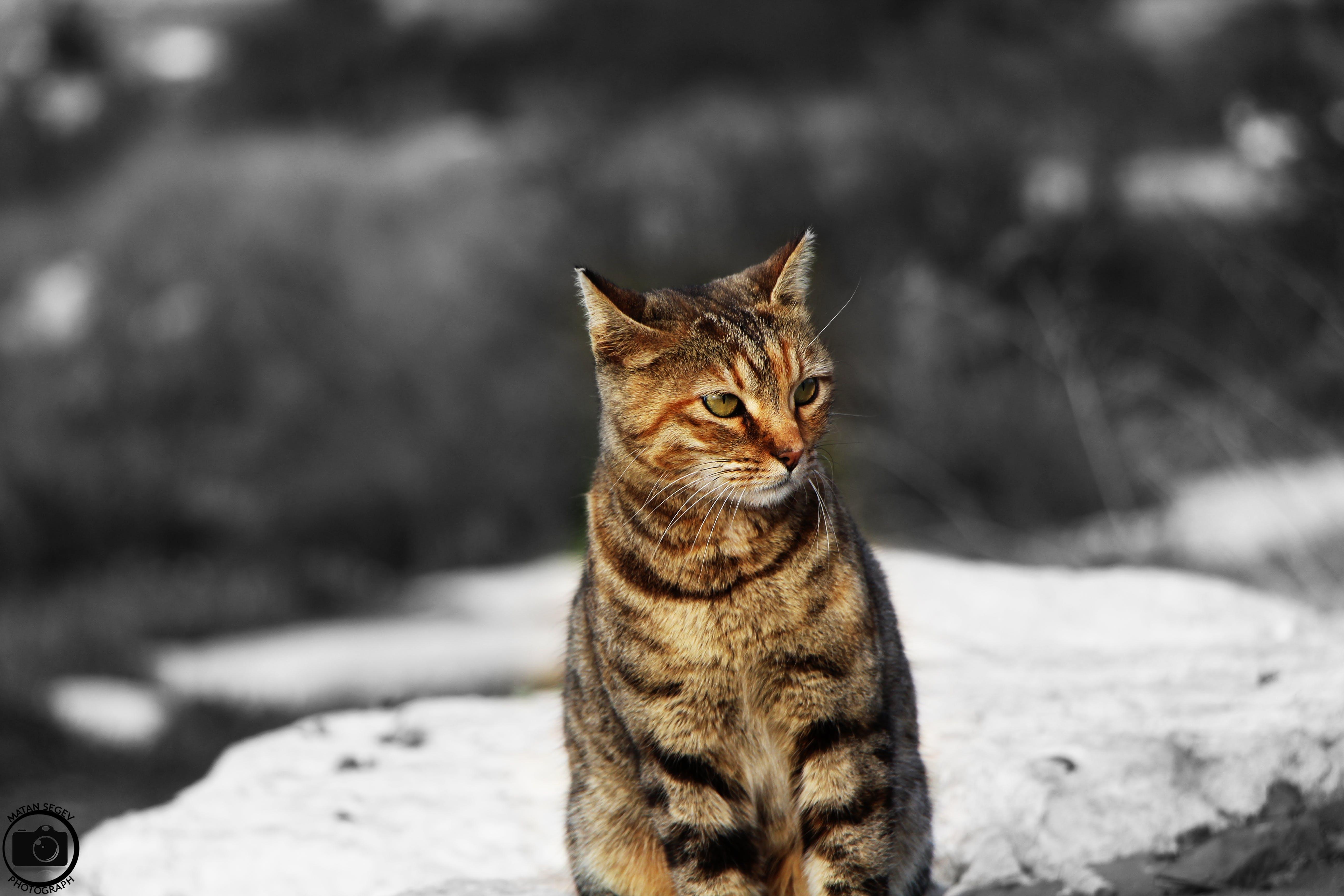 Free stock photo of animal, power, cat, eye