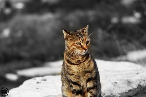 Free stock photo of animal, cat, eye, fear