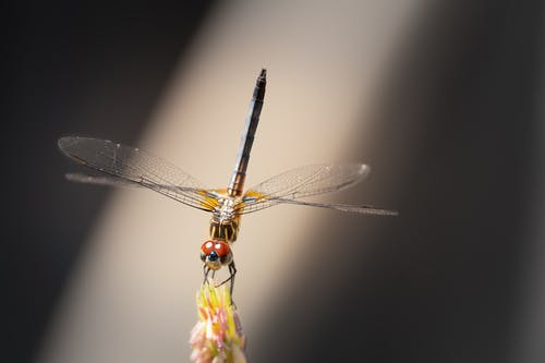 Red and Black Dragonfly Perched on Yellow Flower in Close Up Photography