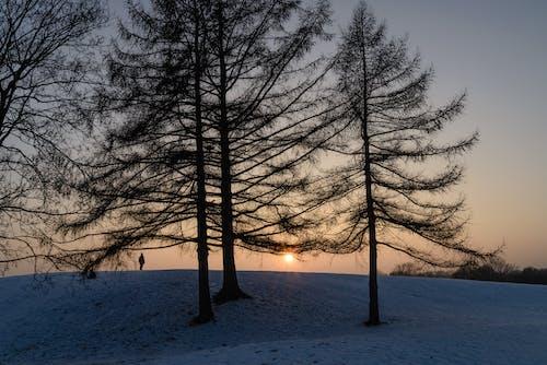 Бесплатное стоковое фото с деревья, закат, зима, мужчина
