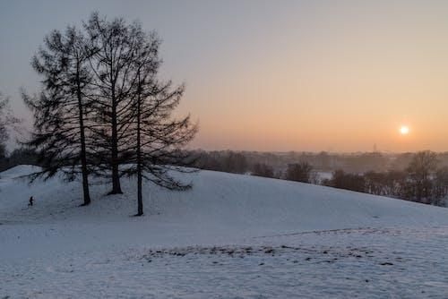 açık hava, ağaçlar, Akşam gökyüzü, akşam Güneşi içeren Ücretsiz stok fotoğraf