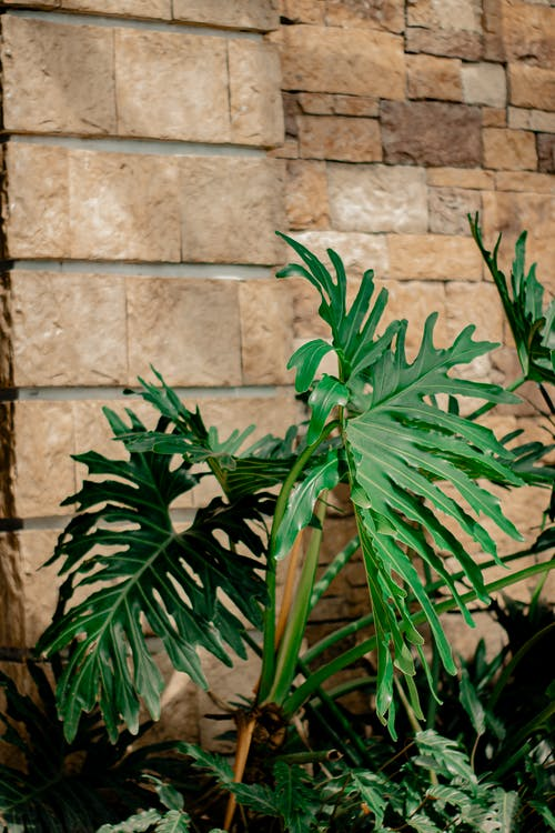 Potted fern growing near stone wall