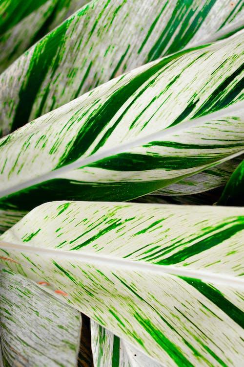 Verdant plant leaves in bright sunlight