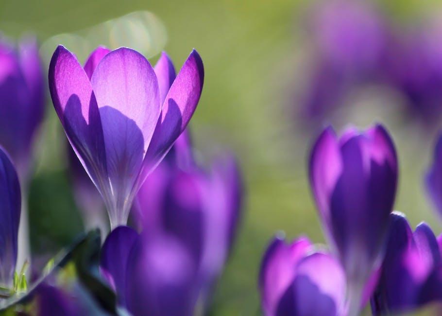 Purple Flower Buds in Field