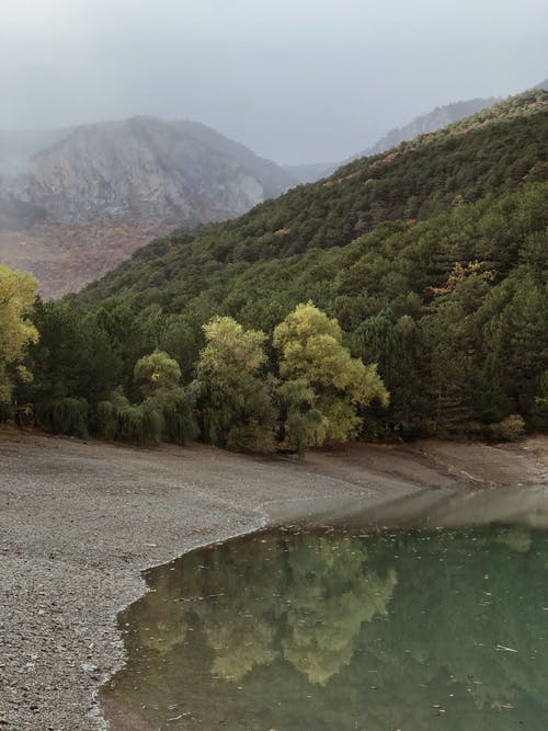 Lake surrounded by lush green forest growing in mountainous valley on foggy day