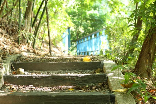 Free stock photo of forest trail, ladder, mothernature