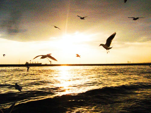 Free stock photo of seagulls