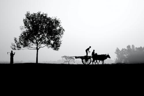 bw, 가축, 경치의 무료 스톡 사진