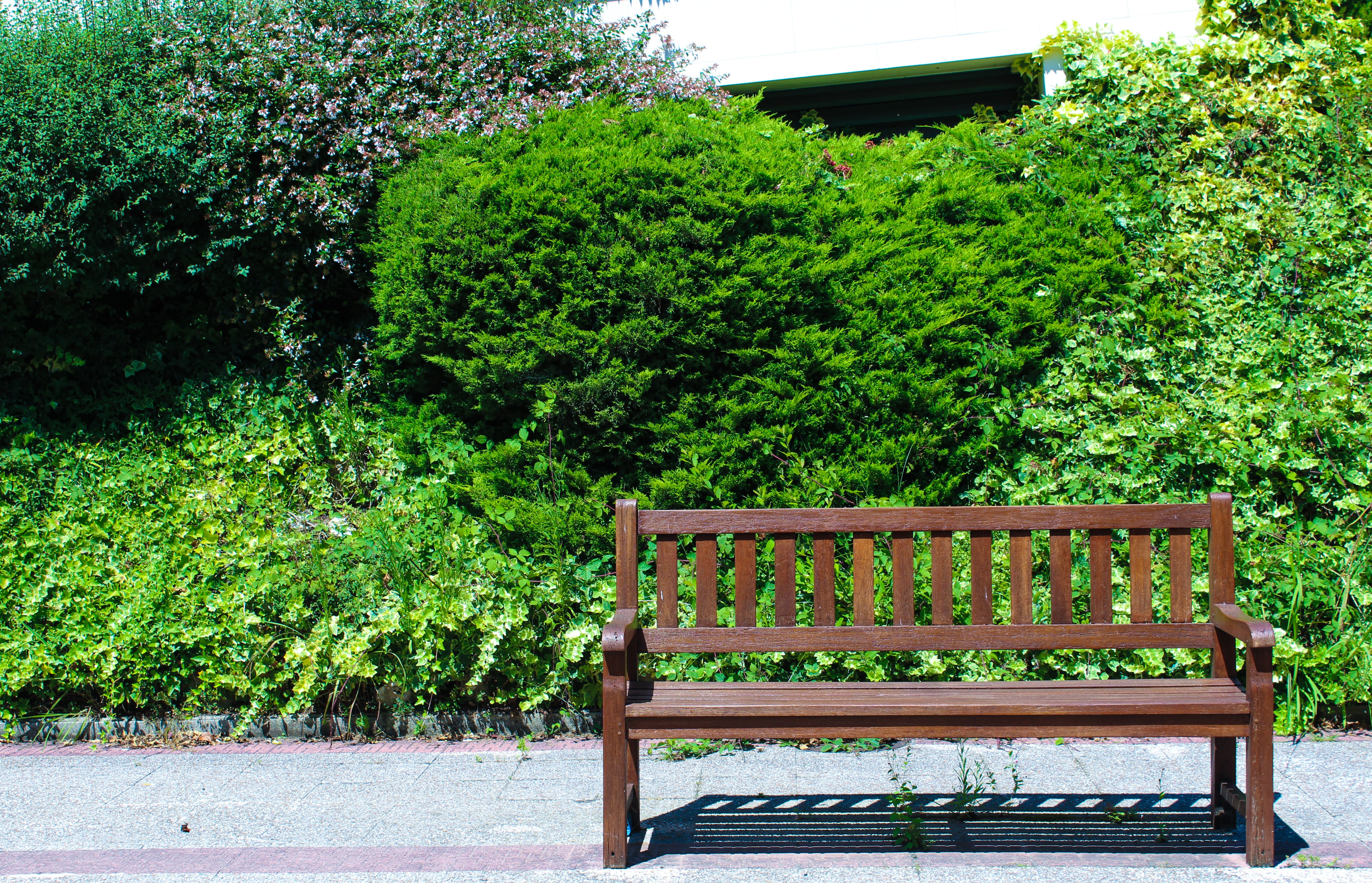 Free stock photo of bench, brown, colors, green