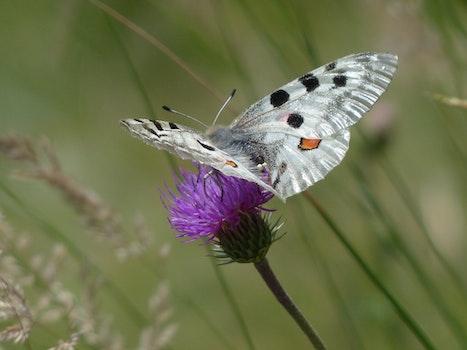 White Ad Black Butterfly Perching on Purple Petal Fower