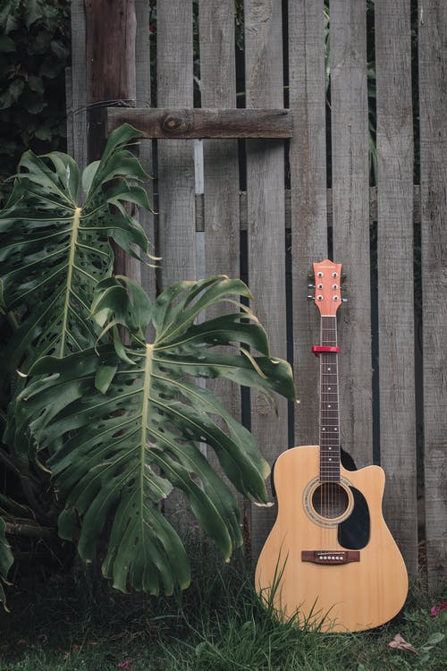 Fretted musical instrument placed on grass near rustic fence and big branches of plant