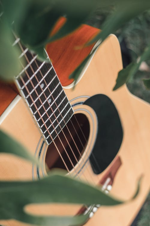 Acoustic guitar placed among green leaves
