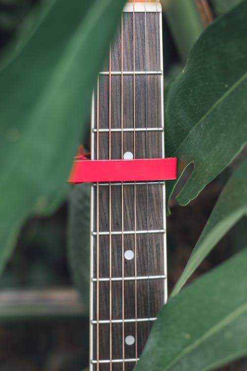 Capo on neck of guitar among foliage