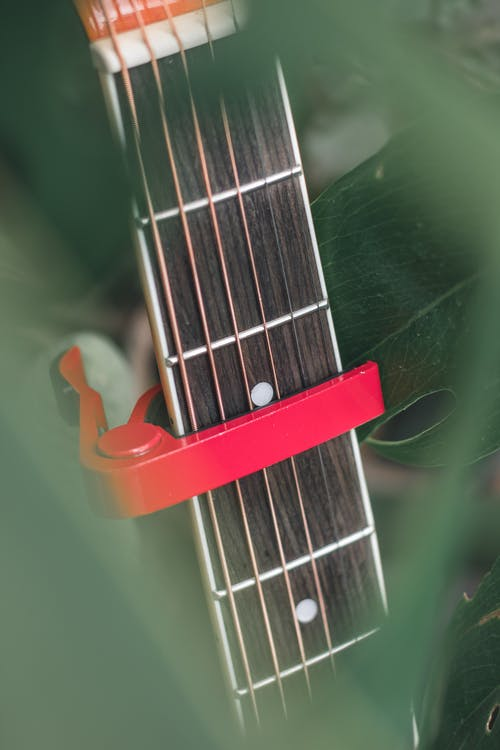 High angle of guitar with capotasto on strings of acoustic instrument among green leaves