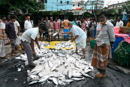 Free stock photo of fish, fish market, market place