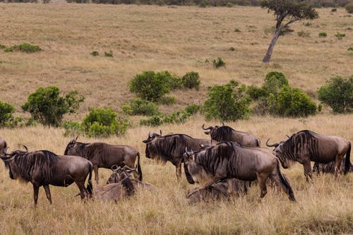 açık hava, Afrika, ağaç içeren Ücretsiz stok fotoğraf