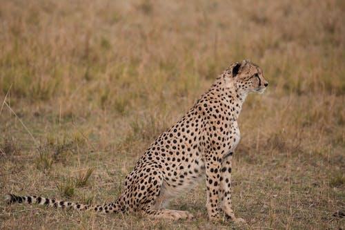 Foto profissional grátis de África, ágil, ameaça