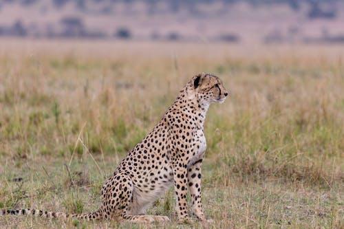 Foto profissional grátis de África, animais selvagens, animal