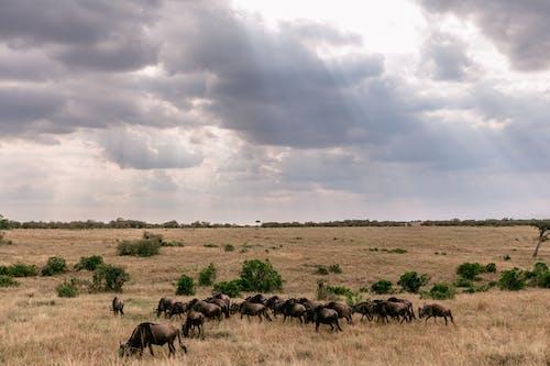 Imagine de stoc gratuită din acoperit de nori, Africa, animal